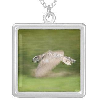 Gran búho de cuernos (virginianus del bubón) collar plateado