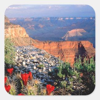 Gran Cañón del cactus de la taza de clarete del Pegatina Cuadrada