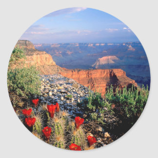 Gran Cañón del cactus de la taza de clarete del Pegatina Redonda