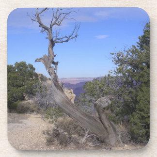 Gran Cañón desnudo del árbol Posavasos De Bebidas