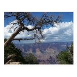 Gran Cañón la postal pintada de Arizona del desier