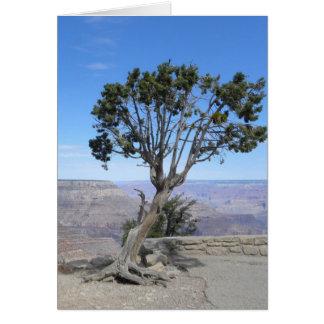 Gran Cañón, tarjeta del sur del árbol del borde