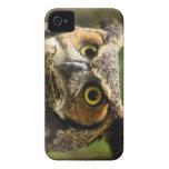 Gran caso del búho de cuernos Case-Mate iPhone 4 funda