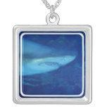 Gran collar del tiburón blanco