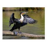Gran cormorán con las alas abiertas tarjetas postales