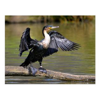 Gran cormorán con las alas abiertas postal