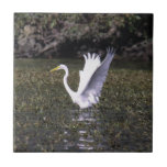 Gran Egret Azulejos