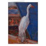 Gran Egret, bahía de Humboldt Felicitaciones