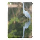 Gran Egret blanco