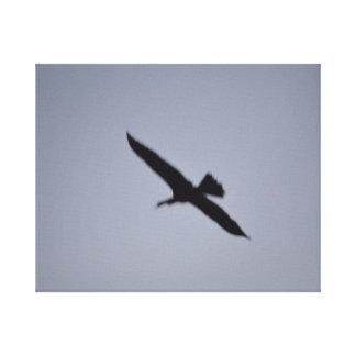 gran egret blanco de la Florida contra pájaro de Lienzo Envuelto Para Galerías