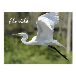 Gran Egret blanco de la Florida Postal