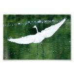 Gran Egret blanco Fotografía