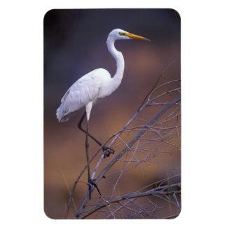 Gran egret blanco imanes rectangulares