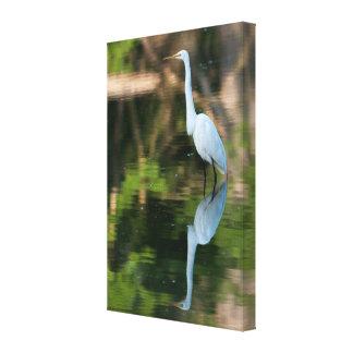 Gran Egret blanco Impresión En Lona