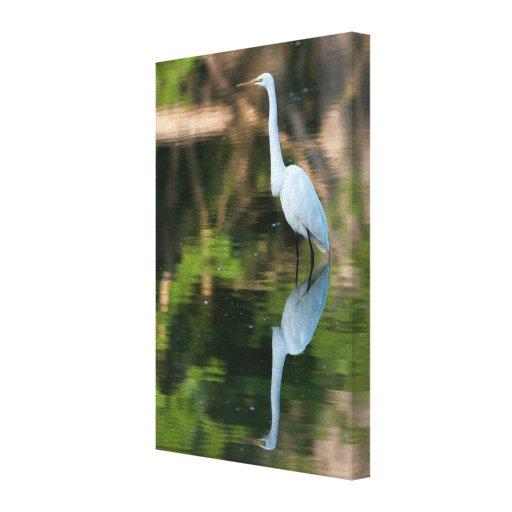 Gran Egret blanco Lona Envuelta Para Galerías
