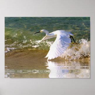 Gran Egret blanco Poster