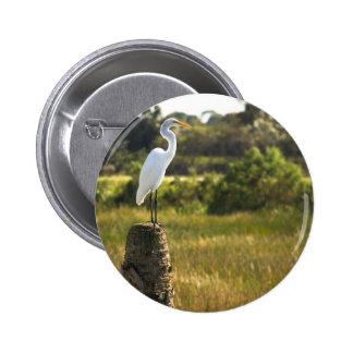 Gran Egret en el botón de los humedales de Viera Pins