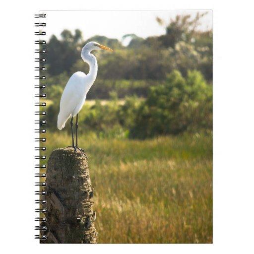 Gran Egret en el cuaderno de los humedales de Vier