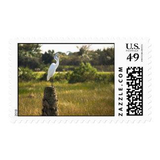 Gran Egret en el franqueo de los humedales de Vier