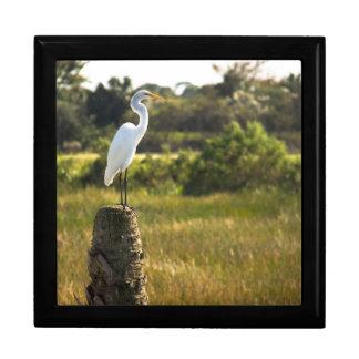 Gran Egret en el giftbox de los humedales de Viera Cajas De Joyas