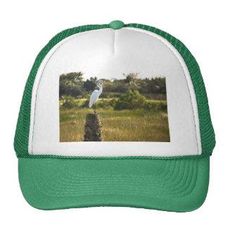 Gran Egret en el gorra de los humedales de Viera
