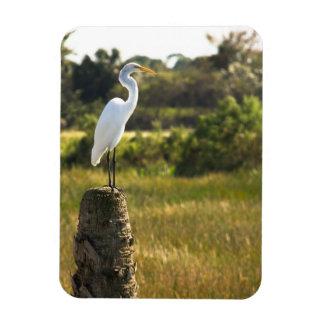 Gran Egret en el imán superior de Flexi de los hum