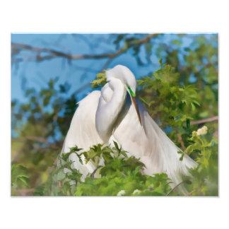 Gran Egret en el momento de la maternidad Fotografía