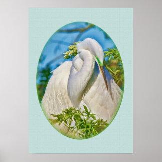 Gran Egret en el momento de la maternidad Posters
