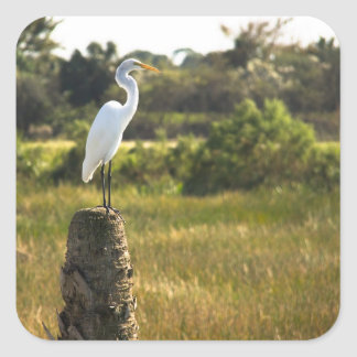 Gran Egret en el pegatina de los humedales de