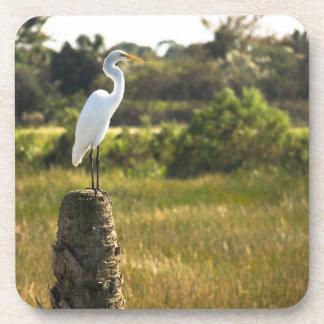 Gran Egret en el práctico de costa del corcho de l Posavasos De Bebidas