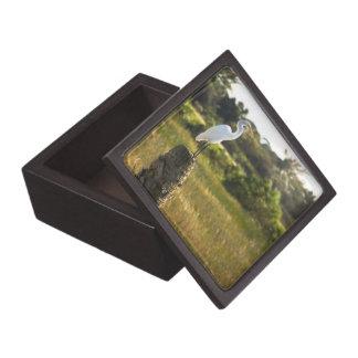 Gran Egret en la caja de regalo superior de los hu Cajas De Recuerdo De Calidad