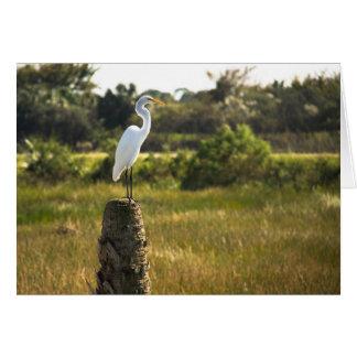 Gran Egret en la tarjeta de los humedales de Viera