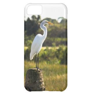 Gran Egret en los humedales de Viera