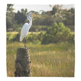 Gran Egret en los humedales de Viera Bandanas