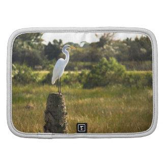 Gran Egret en los humedales de Viera Planificadores
