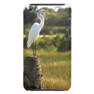 Gran Egret en los humedales de Viera Case-Mate iPod Touch Fundas