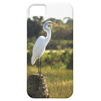 Gran Egret en los humedales de Viera iPhone 5 Protector