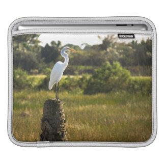 Gran Egret en los humedales de Viera Fundas Para iPads