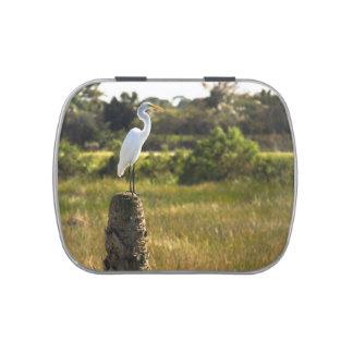 Gran Egret en los humedales de Viera Latas De Caramelos