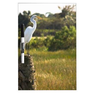 Gran Egret en los humedales de Viera Pizarra Blanca