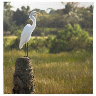 Gran Egret en los humedales de Viera Servilleta