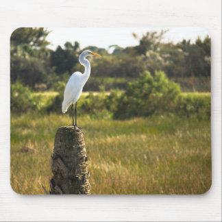 Gran Egret en los humedales Mousepad de Viera Alfombrilla De Ratones