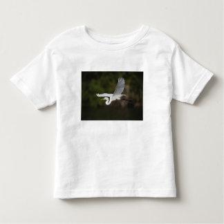 Gran Egret en vuelo, albus del Casmerodius, Playera