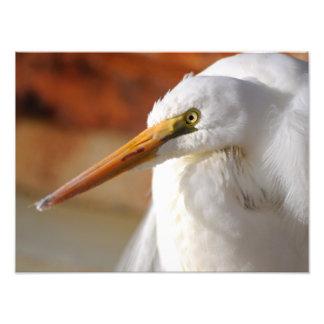 Gran Egret Fotografías