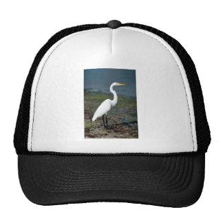 Gran egret gorra