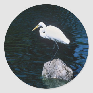 Gran Egret Pegatina Redonda