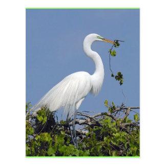 Gran Egret, postal de la Florida
