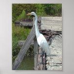 Gran Egret Póster