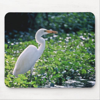 Gran Egret Tapetes De Ratones