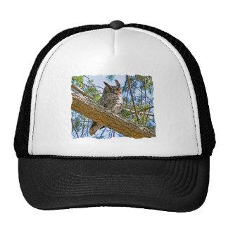 Gran foto del búho de cuernos gorras